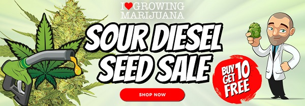 Free Sour Diesel Cannabis Seeds Offer