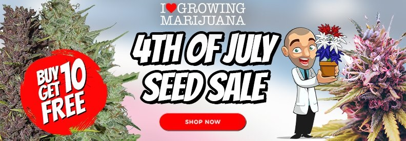 Get Free Cannabis Seeds In The Independence Day Offer