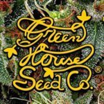 Greenhouse Seed ranges are available in Feminized. Greenhouse Seeds are available in packs of 3, 5 & 10. All Greenhouse Cannabis Seeds come with our Price Guarantee.