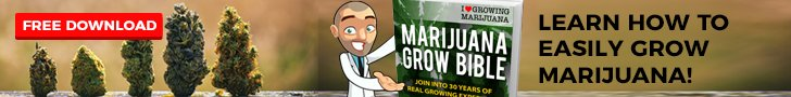 Grow Cannabis Seeds In The USA