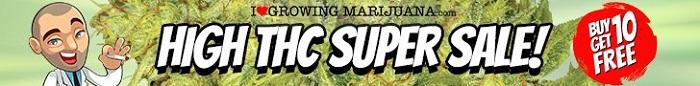 High THC Cannabis Seeds Offer