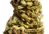 Jack Herer Feminized Cannabis Seeds For Sale
