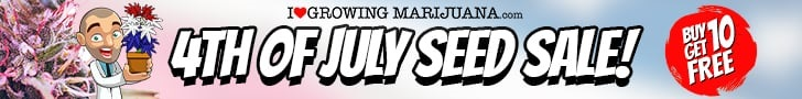 July 4th 2021 Cannabis Seeds Sale