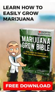 Learn How To Grow Feminized Autoflowering Seeds