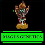 Magnus Genetics Cannabis Seeds