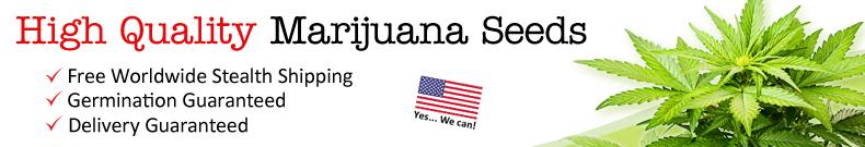 Marijuana Seeds To The USA