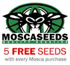 Mosca Seeds - Free Cannabis Seeds With Every Order