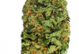Northern Lights Feminized Cannabis Seeds For Sale
