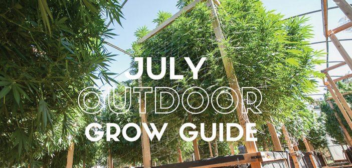 outdoor marijuana growing guide for beginners