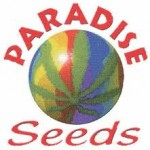 Paradise Seeds are available in packs of 3, 5 & 10. All Paradise Cannabis Seeds come with our Price Guarantee.