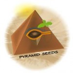 Pyramid Seed ranges are available in Feminized.  Pyramid Seeds are available in packs of 1 & 5. All Pyramid Cannabis Seeds come with our Price Guarantee.