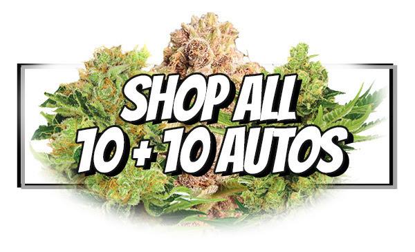 Shop Autoflowering Seed Deals