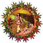 Soma Seeds ranges are available in Regular & Feminized.  Soma Seeds are available in packs of 5 & 10. All Soma Seeds come with our Price Guarantee.