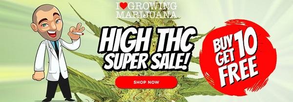 Super High THC Cannabis Seeds Sale