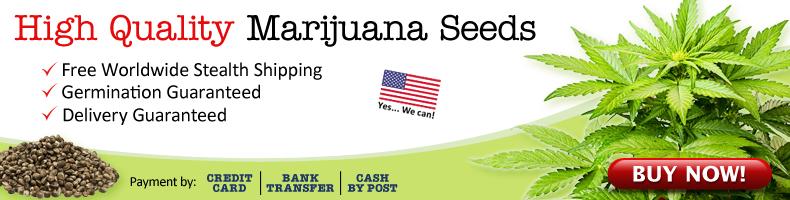 US Cannabis Seeds Free Worldwide Shipping