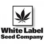 Sensi White Label Seeds are available in packs of 3, 5 & 10. All Sensi White Label Cannabis Seeds come with our Price Guarantee.