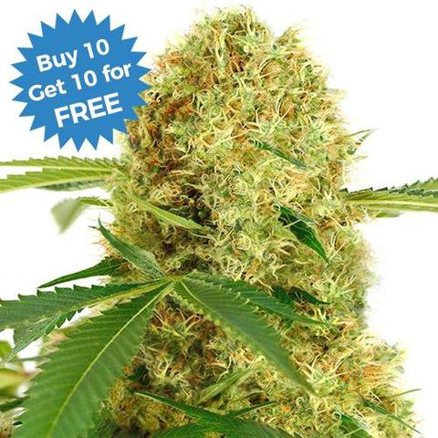 White Widow Seeds