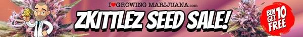 Zkittlez Seeds Sale